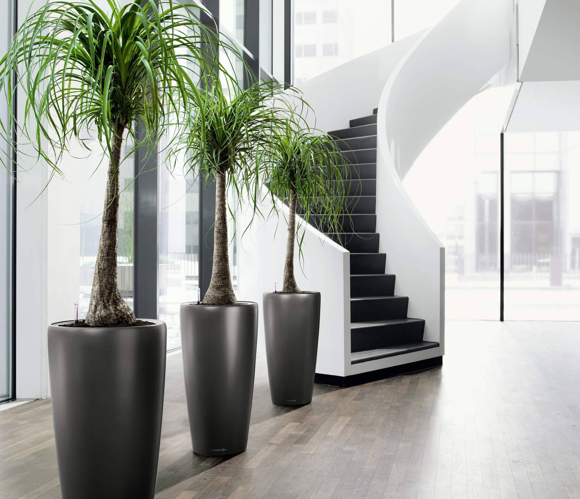 Высокие домашние растения фото и названия