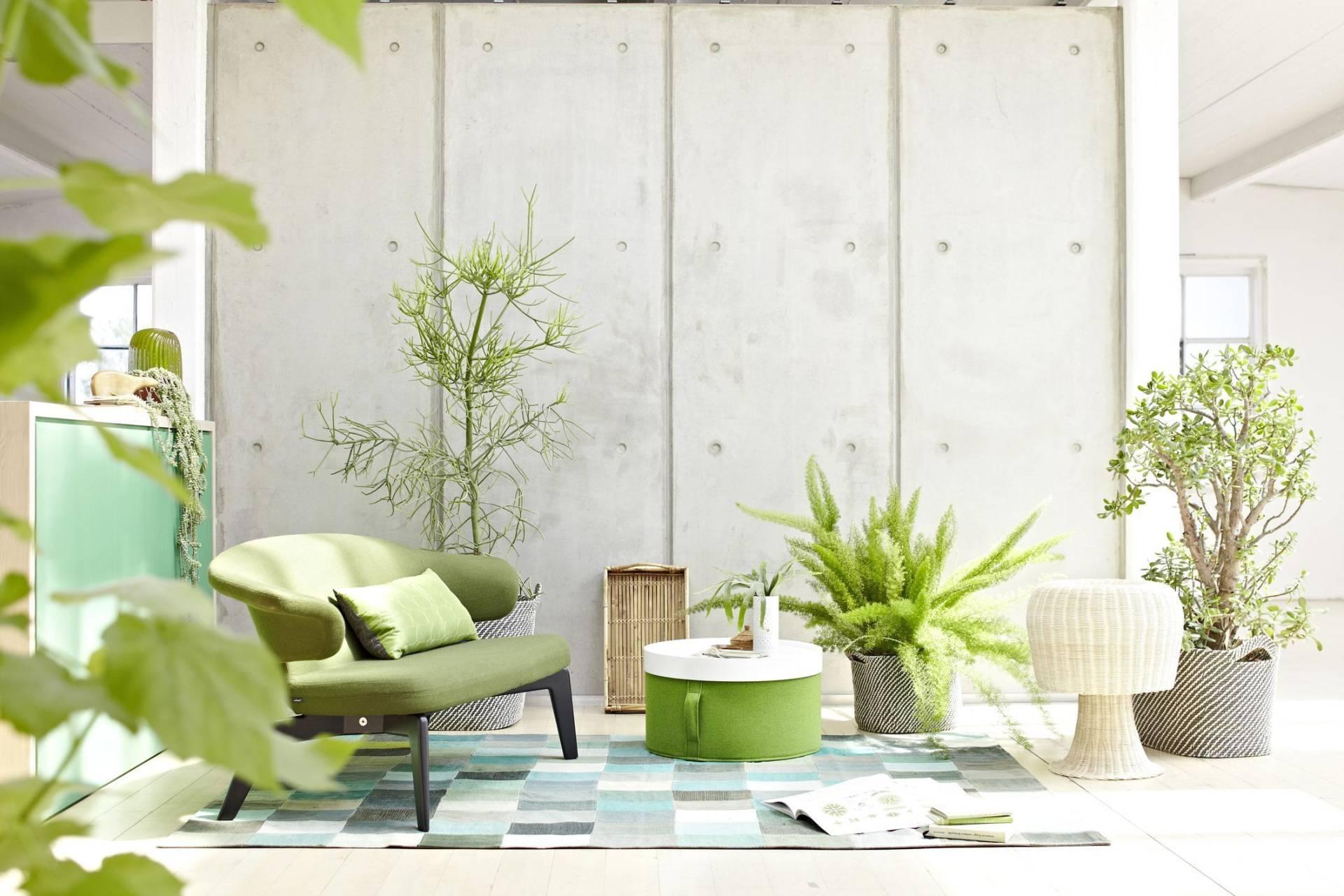 Как можно использовать комнатные растения в интерьере